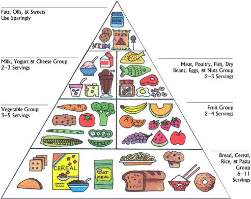 ... the amount of foods we need to buy from the different groups of food