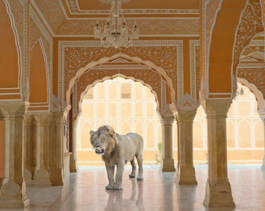 P33 The last Lion, Diwan I KHas City Palace Jaipur